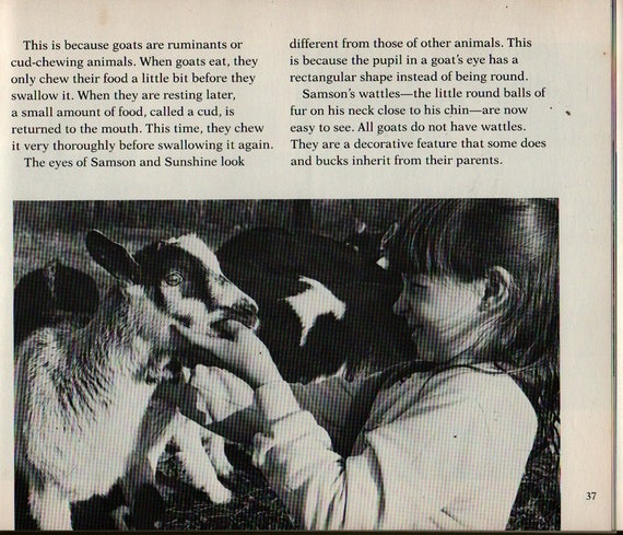 Kids Are Baby Goats – First Edition - Janet Chiefari - 1984 - Vintage Kids Book