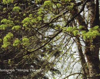 "Postcard of ""Moving Through"""