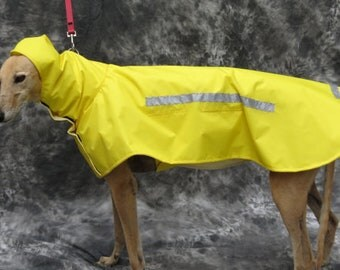 Greyhound Happy's Yellow Greyhound Raincoat, Medium
