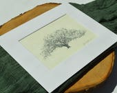 Pen and Ink Oak Tree Drawing - Savannah's Candler Oak Fine Art Print