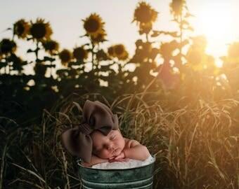 Sunflower field Newborn Digital Background