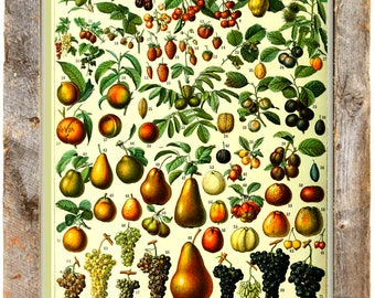 Vintage Fruit Poster - vintage lithograph repro ~ Kitchen art ~ fruit chart ~ vintage kitchen art ~ cooking poster ~ culinary ~ Giclee Print