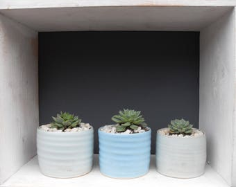Tiny Echeveria Succulent Plant in a Small Blue Handthrown Pot