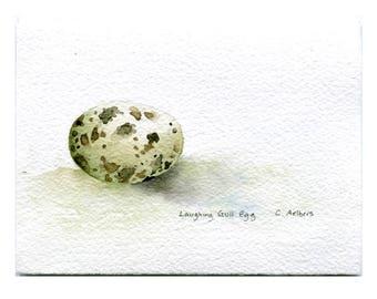 Laughing Gull Original Art Card - Original Hand Painted Watercolor