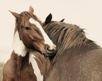Western Horse Art   Monochromatic Horse Photography   Physical Print