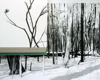 Winter Magnolia, 2013