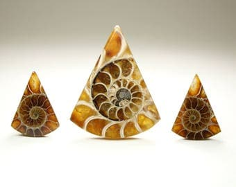 Triangle Ammonite Fossil Designer Cabochon Set