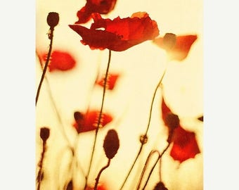 Red Poppy print: nature photography, Red Poppies No.2 Fine Art Photography Still life Photography, Flower photography botanical art prints