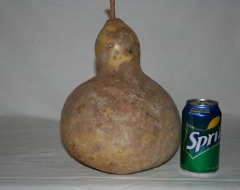Wine Kettle Gourd, uncleaned
