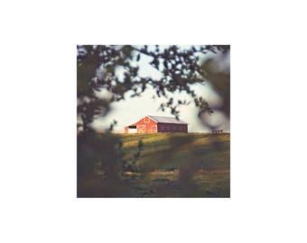 Old Red Barn Photo. Landscape Photography. Country. Rustic. Red. Green. Brown. Hill. Tree. Petaluma