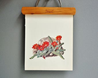 Vintage Cactus Book Plate - Red Flowers