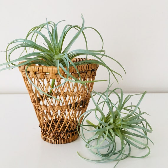 Vintage Wicker Basket Miniature Rattan Plant Holder Woven Small Air Plant Bohemian Basket Boho Decor