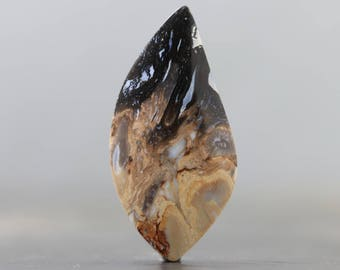 Root Fossil Birds Eye Agate Opalized Fossil Palm Wood Polished Gemstone Natural Specimen (CA8772)