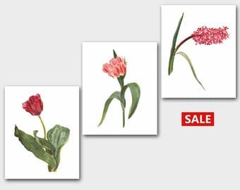 Pink Flower Prints, Set of 3 Botanical Art (Country French Artwork, Vintage Home Wall Decor) --- Spring Collection