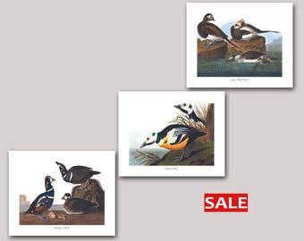 Set of 3 Sea Duck Prints, Harlequin Duck Art, Western Duck Art, Long Tailed Duck Art (Audubon Bird Prints, Pacific Ocean) SALE