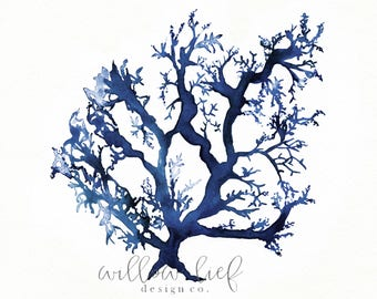 No.1 Sea Coral in Navy Blue, Denim blue, Coral print, Beach Art, Coral watercolor, Coral Art, Coral print, Wall Art, Coral,  ocean life