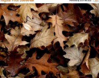 "ON SALE Oak Leaves Fine Art Photography Print  ""Autumn Brown"" 11"" x 14"" Autumn Leaves, Brown, Brown Fallen Leaves"