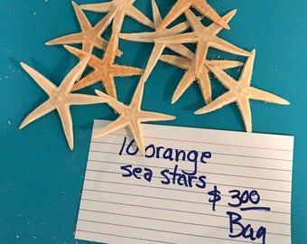 orange sea stars