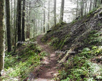 Eagles Rest Trail, DIGITAL DOWNLOAD, forest decor, woodland photography, forest  art, woodland style, Fine Art Photography by HikingTrails