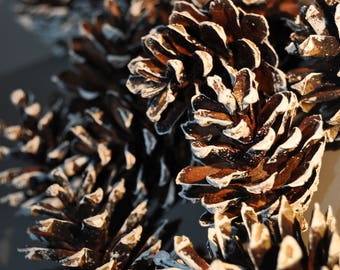 12 professionally cleaned prepped and painted white tipped fir pine cones for christmas crafts wreaths table centre wedding favour perfect
