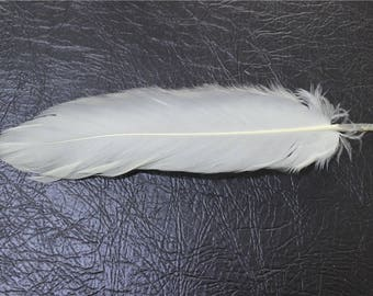 beige color for your creation 10 feathers