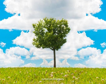 Surreal Tree in a Field Photo, color photograph, green, blue, red, pink, panoramic fine photography print, Coalescence