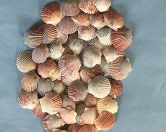 50 Scallop Shells Various Colors Bulk Shells Craft Shells Home Decoration  A305