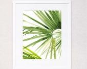 Palm Bend (Watercolor Art Print)