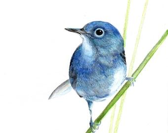 Blue bird, water color print