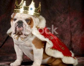 King dog, dog costume as king, Red cape dog costume, King costume for dogs, King costume for a dog