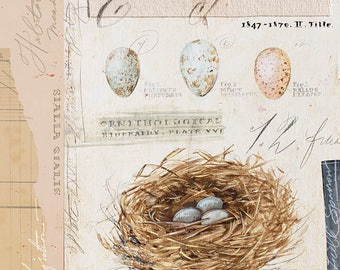Nest Print, Nest Illustration, Bird Nest Illustration, Egg Decor, Bird Art, Bird Nest Art, Bird Illustration