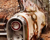 1960 Cadillac Pink Series 62 Tail Fins in woods Photograph