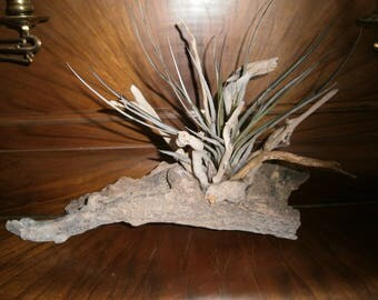 Medium Driftwood with a tillandsia