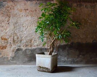 Jardinière rétro vintage en Eternit design Willy Guhl années 60 forme cubique fonctionnalisme suisse plant pot design swiss flowerbox