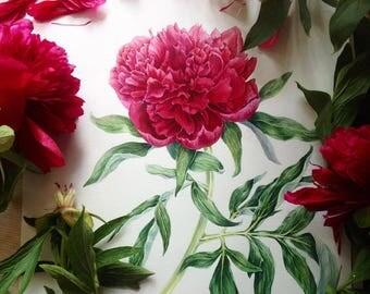 Watercolor botanical illustration: Red peony.Art print.