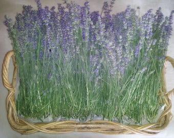 Sanctuary Farm Lavender