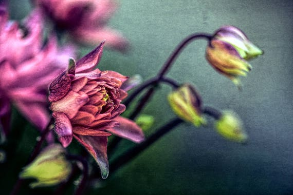 "Metal Art Print ""Sweetness"", Flower Photography Printed on a Brushed Aluminum Box, 24x16x1, Special Order Only"