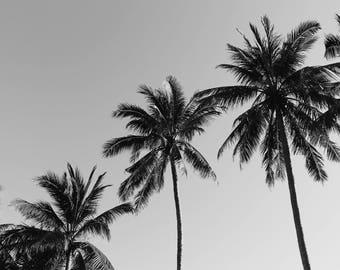 Thai Palm Trees Black & White Photo, Beach Photography, Instant Download, Art Prints, Decor, Digital Download, Beach Art, Print