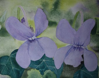 floral watercolor: duo of spring violets