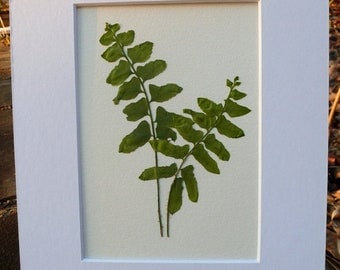 SALE Real Pressed Christmas Fern Botanical Art Herbarium  5x7 OR 8x10