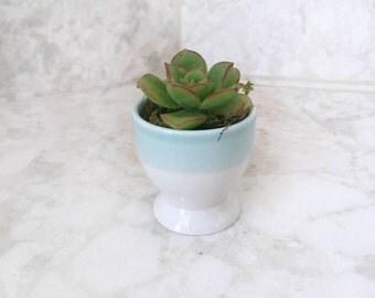 Monochrome Blue & White Succulent Planter - Live Succulents Included