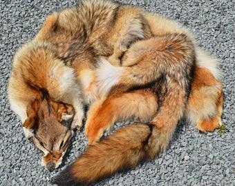 Gorgeous Wallhanger Coyote Pelt No Legs Rug Cut