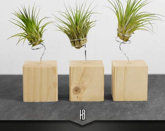 Air plant with silver wire on wood cubes spruce