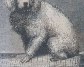 Antique Poodle Engraving Early Print Great Period Look