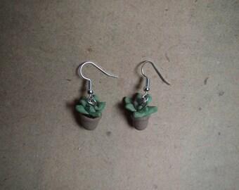 Earrings succulent, houseplant, Echeveria