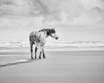 The Wanderer - Black & White Horse Print Fine Art Photography (Wall Decor, Equine Art, Horse photography)