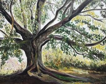 Ficus magnolioides