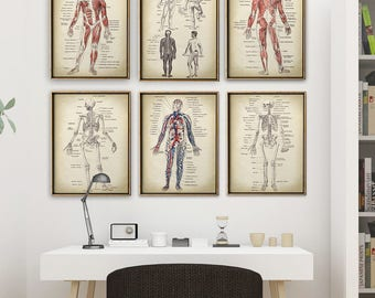 ANATOMY print SET of 6 Art Prints, Anatomy Poster  Set, instant collection, Medical, Skeleton, Human Body Art