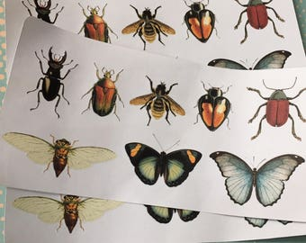 Beetles, Butterflies, Bugs Stickers | Bug Stickers | Insect Stickers | Stickers | Planner Stickers | Journaling Stickers