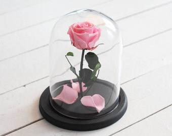 Beauty and the beast rose (Medium), Belle Rose, forever pink rose, Enchanted Rose, rose in glass, preserved rose, five  year rose